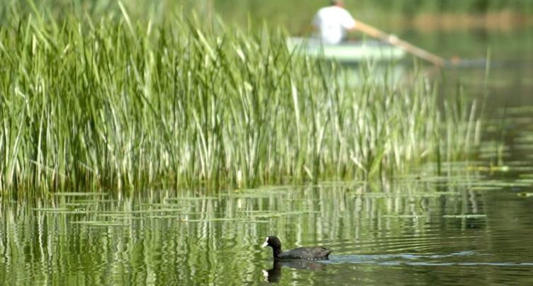 Les produits phytosanitaires font des ravages au fond des lacs