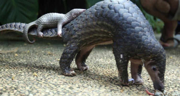 Contrebande d'animaux sauvages: Hong Kong doit durcir ses lois