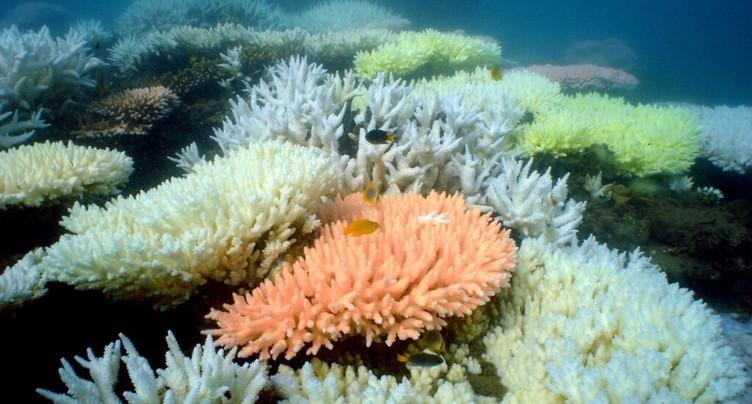 Le blanchiment des coraux commence plus tôt que supposé