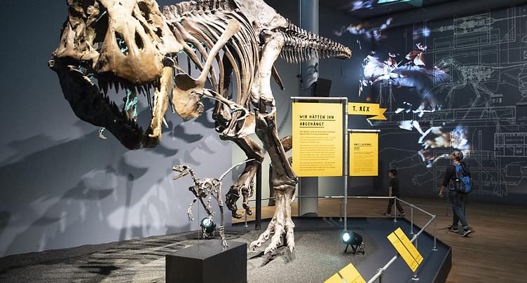 Les jeunes T-Rex ont évincé les espèces de dinosaures plus petites