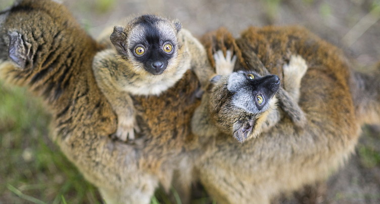 Les espèces endémiques sauvages menacées par le réchauffement