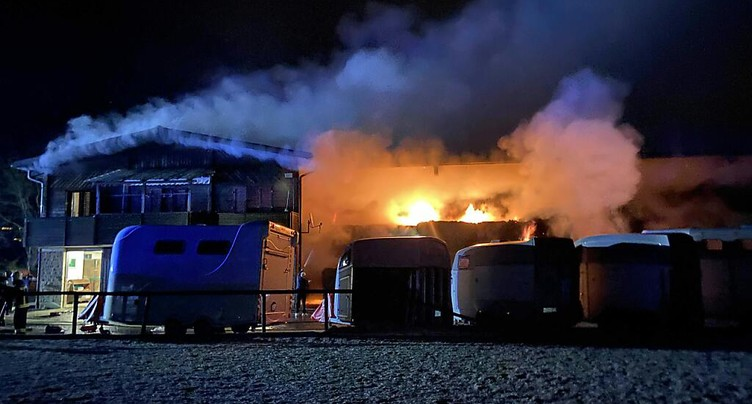 Les 32 chevaux d'un centre équestre sauvés des flammes à Würenlos