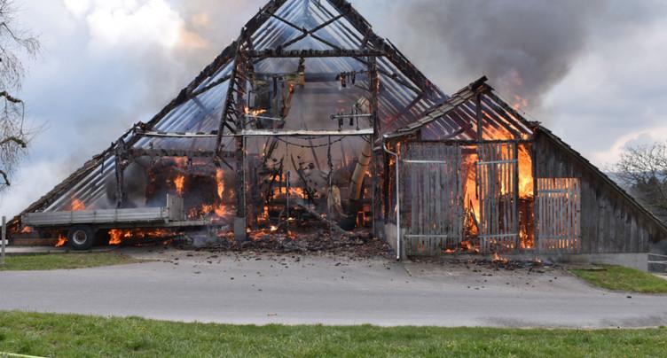Animaux sauvés d'une grange en feu à Ruswil (LU)