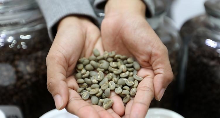 Climat: le parfum d'espoir d'une espèce de café oubliée (étude)