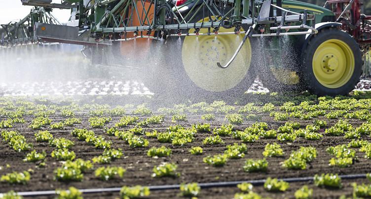 Les petits paysans disent oui à l'initiative sur les pesticides