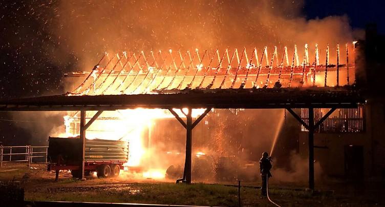 Chevaux sauvés d'une écurie en feu à Andwil (TG)