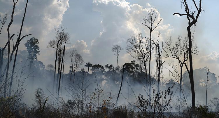 94% de la déforestation en Amazonie est illégale