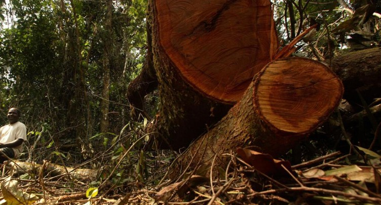 Face à la déforestation, la Guinée interdit la coupe de bois