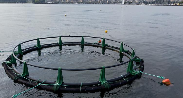 A Genève, les plantes aquatiques faucardées ne sont plus brûlées