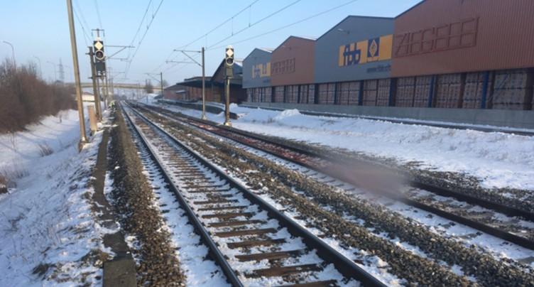 Animaux sur la voie: trafic CFF stoppé