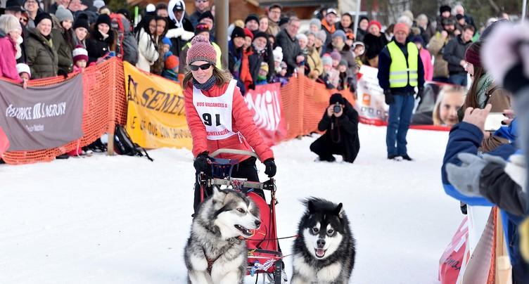 Une édition record pour les courses de chiens de traîneaux