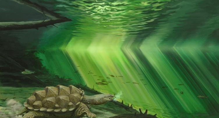 Une tortue fait briller le Jurassica Museum