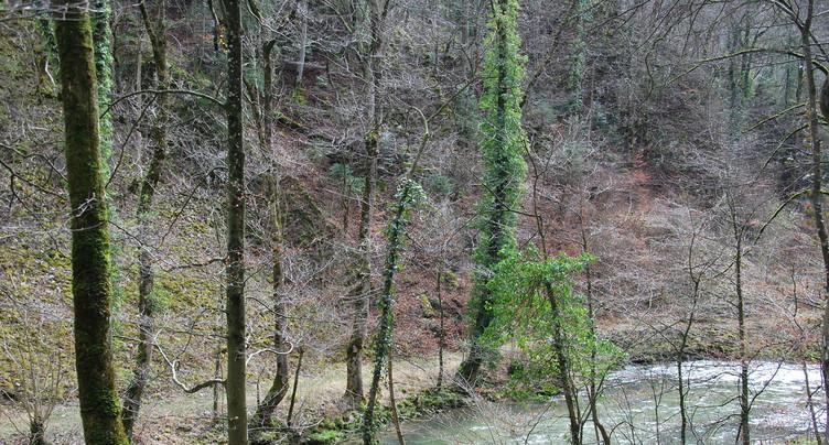 Un guide pour les gorges du Taubenloch