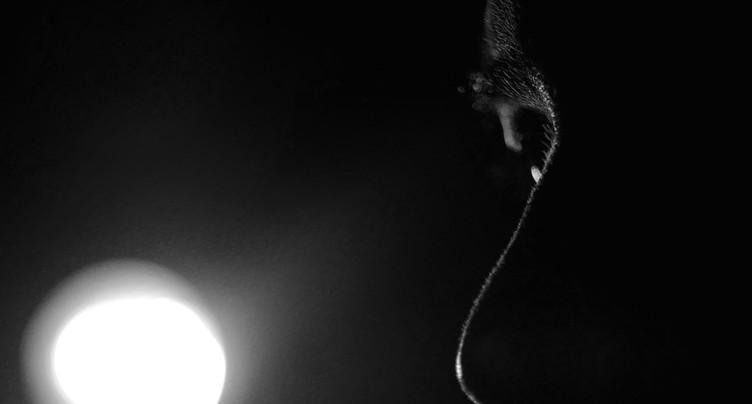 Patrick Jonsson : Les rêveries du musicien solitaire