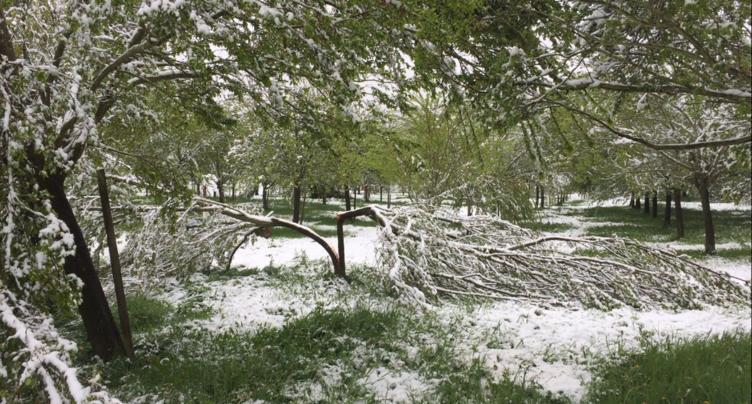 La neige et le gel font des dégâts