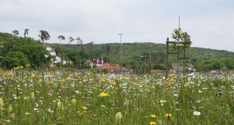 La compensation écologique de l'A16 arrive à son terme