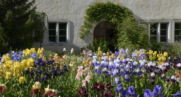 Iris et cactus en fleurs au Jardin botanique de Porrentruy
