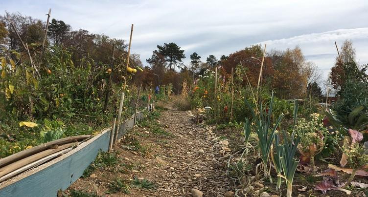 Un jardin extraordinaire à Pierre-à-Bot