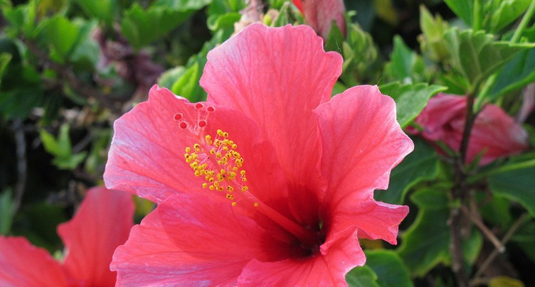Hibiscus, kiwi, raisinet... Les Jardinières ont répondu à vos questions !
