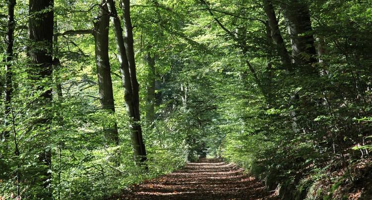 Biodiversité : le bord des routes sous la loupe