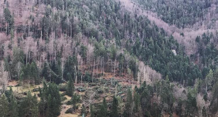 30'000 m3 de bois en moins