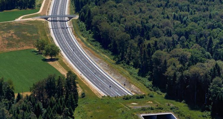 Les animaux s'habituent à l'autoroute