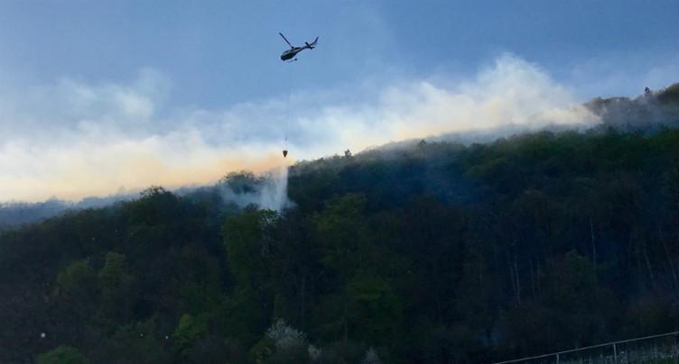 Incendie de forêt élucidé à La Neuveville
