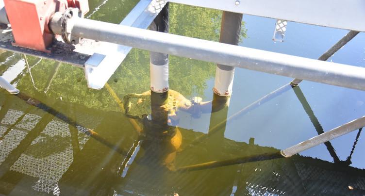 Modification de la loi sur la protection des eaux approuvée par le Conseil-exécutif