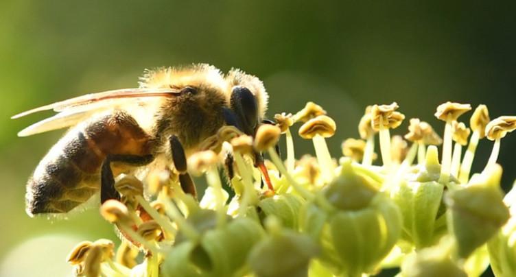Une journée mondiale consacrée aux abeilles et célébrée à Neuchâtel