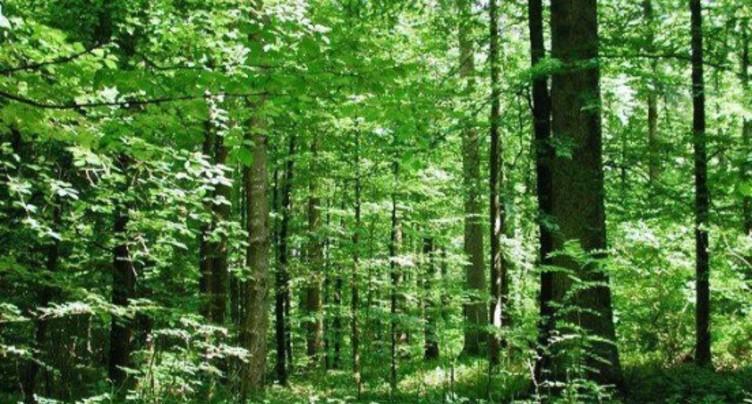 Les forêts du Jura bernois ravies de la pluie