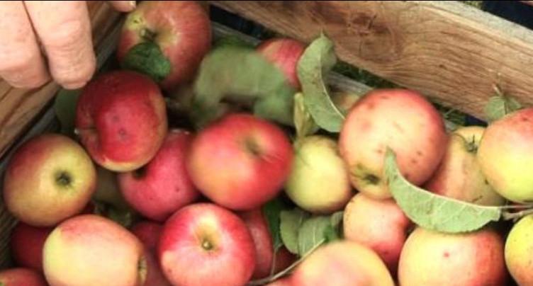 Les jus de pomme jurassiens ont la cote