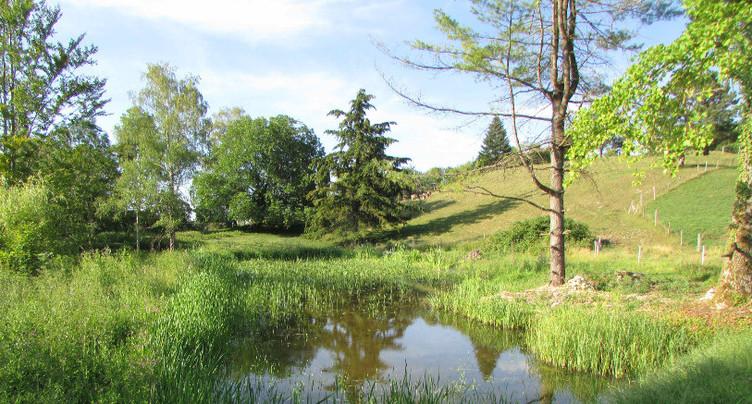 Deux étangs reviennent à la vie à Courtemautruy