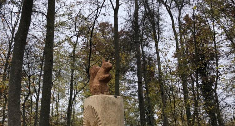 La « Chênaie des Celtes » veut sauver les chênes de La Tène