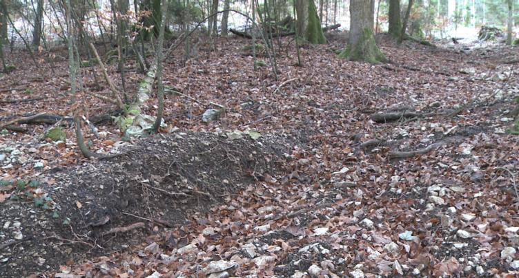 Les autorités s'attaquent à la moto sauvage en forêt