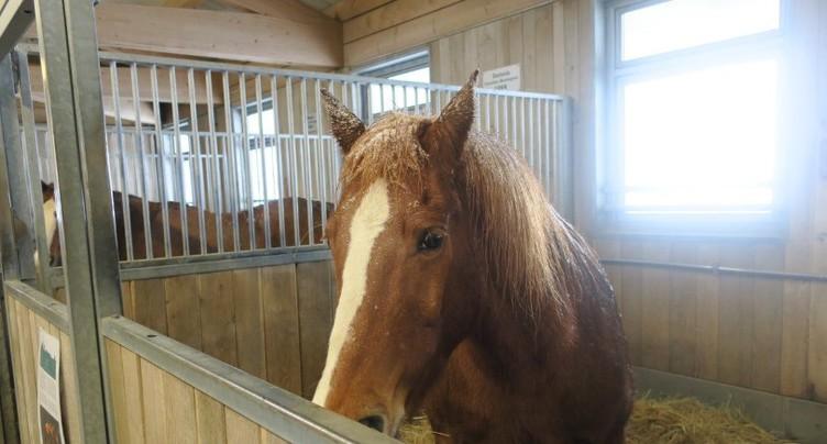 Un nouveau home pour chevaux en projet aux Bois