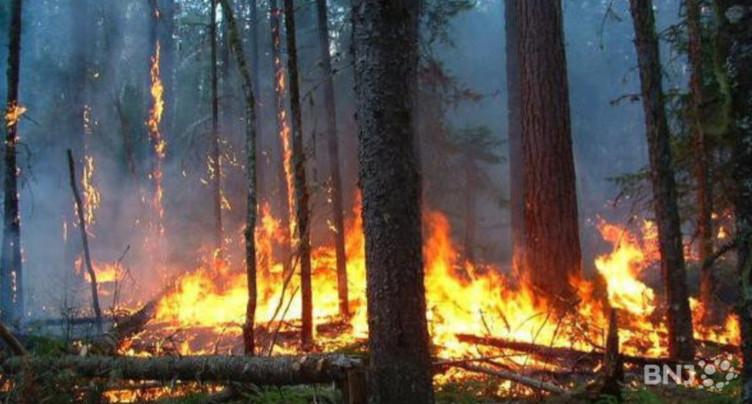 Feux de forêts : le canton de Berne est-il prêt ?