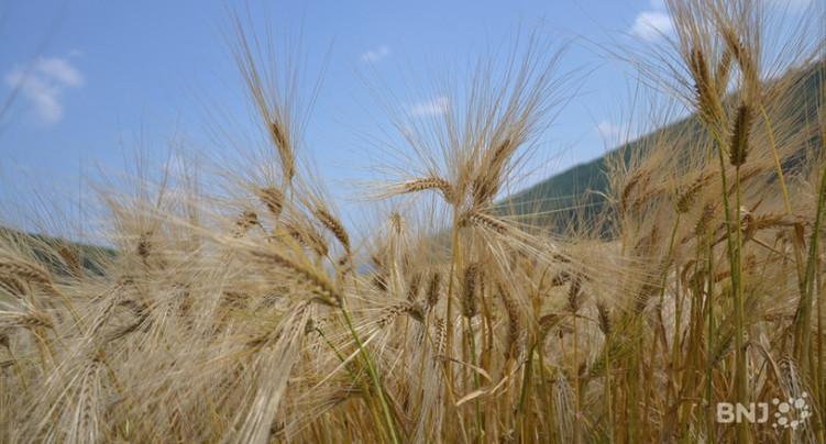 Pure politique : la protection phytosanitaire