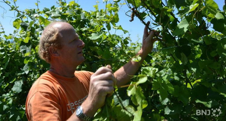 Les vignerons suisses veulent être mieux défendus