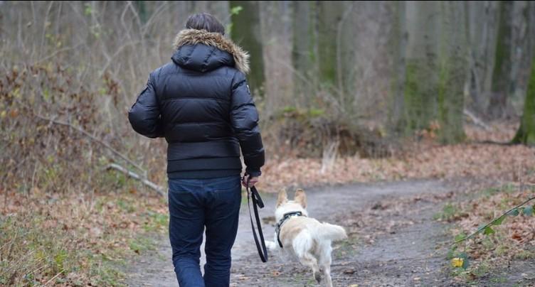 Les chiens non tenus posent problème dans les réserves naturelles