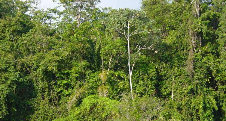 Du goudron et des plumes - biodiversité bousillée