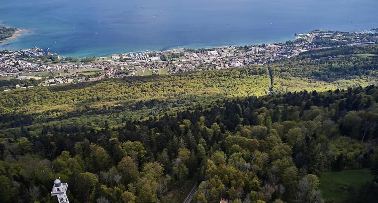 Chêne médaillé à Neuchâtel