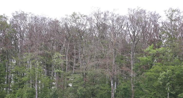 Un crédit extraordinaire pour sécuriser l'accès aux forêts