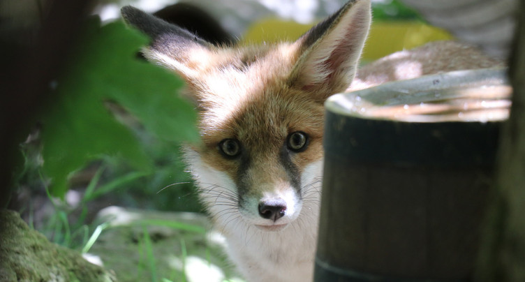 Le Siky Park accueille toujours plus d'animaux en détresse