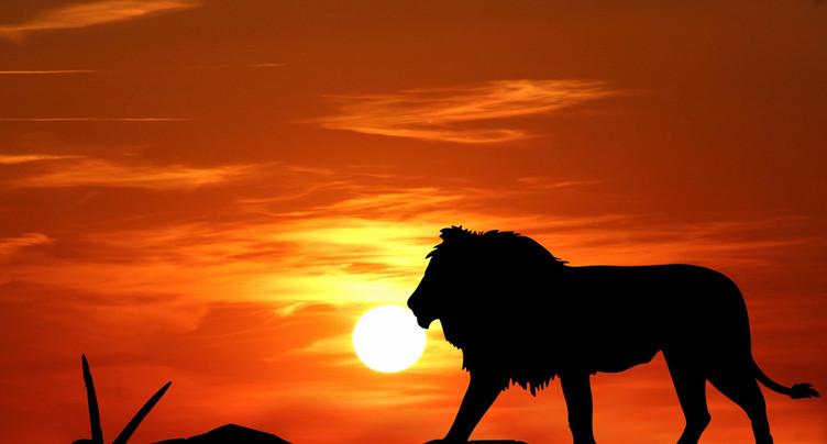 Le Roi Lion est de retour au cinéma