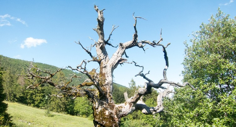 Le Grand Conseil soutient les parcs naturels régionaux