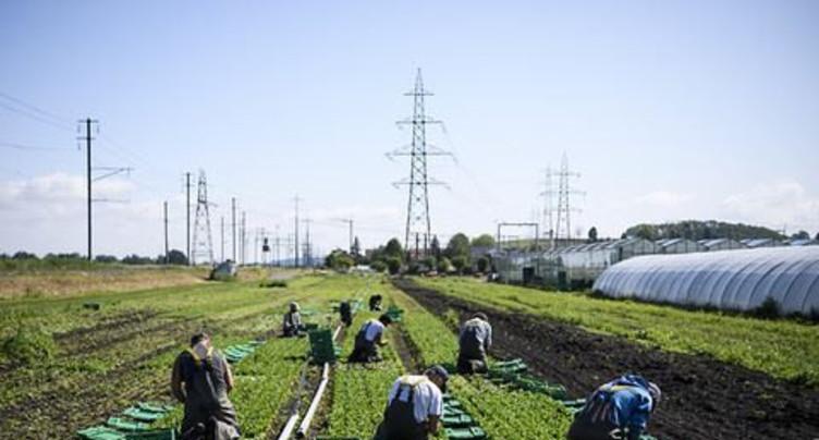 Le droit du travail s'applique aussi dans l'agriculture