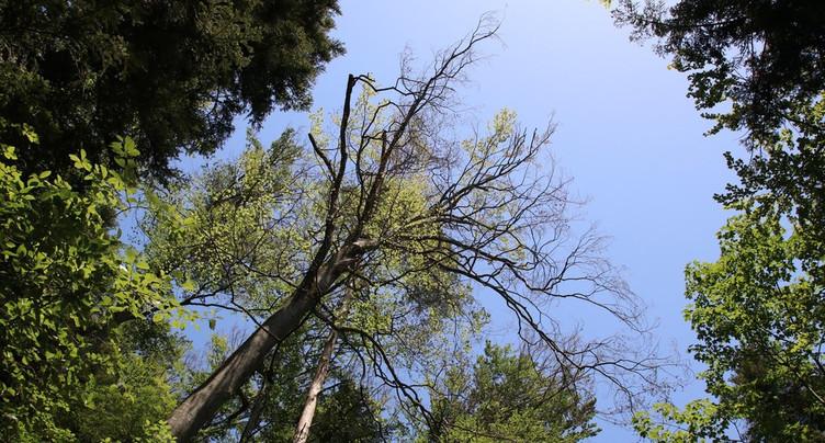 Chemin fermé à Develier pour risque de chute de branches