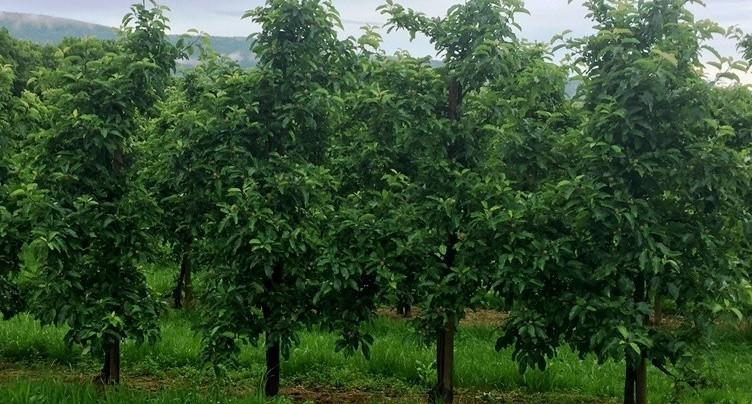 Parrainer des arbres pour reconnecter l'humain à la terre