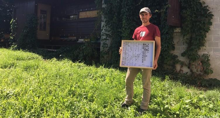 Premier bilan positif pour le projet de sauvegarde des abeilles
