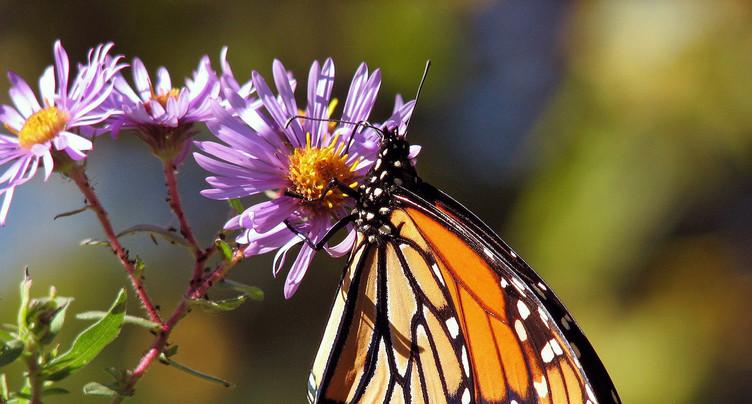 L'avenir du Papiliorama se profile